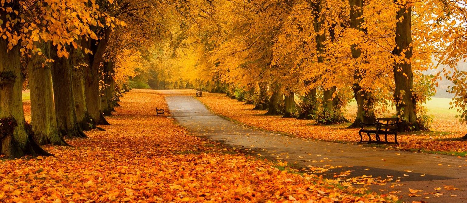 Dom Spokojnej Jesieni BEATUS